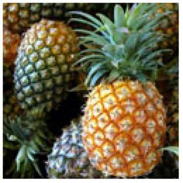 White Pineapple Balsamic, 10L Bucket
